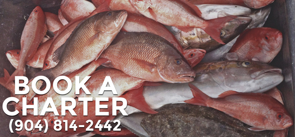 Book A Charter - Nearshore Fishing Trip J-HOOK Fishing Charters Saint Augustine, Florida